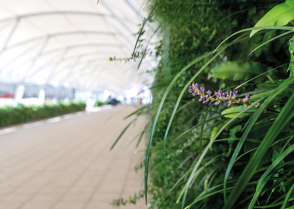 Shot of ExCeL London's new living wall