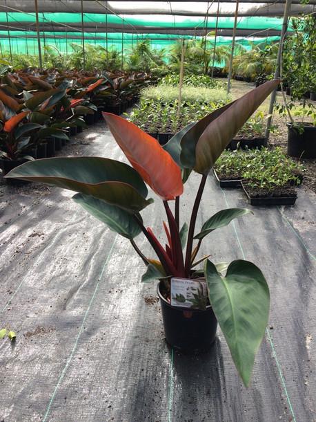 Plant Postulations!
