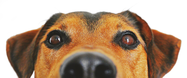 DogHomeLennox.png