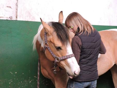 Le cheval, ce magicien