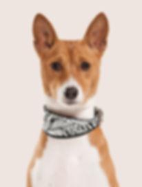 Retrato do cão