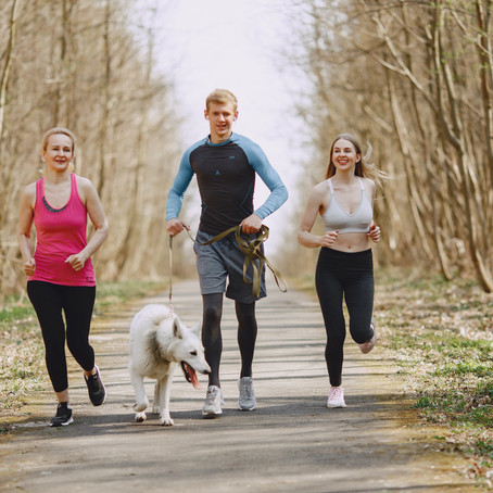 How Dog Walking Can Improve Your Training