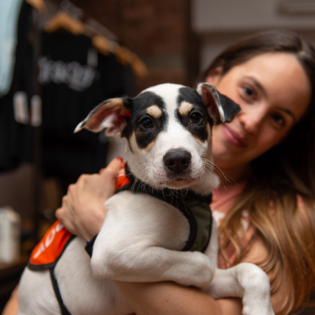 Kickboxing for a Cause: Puppies & Fitness VI