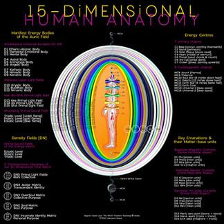15D aura anatomy.jpg