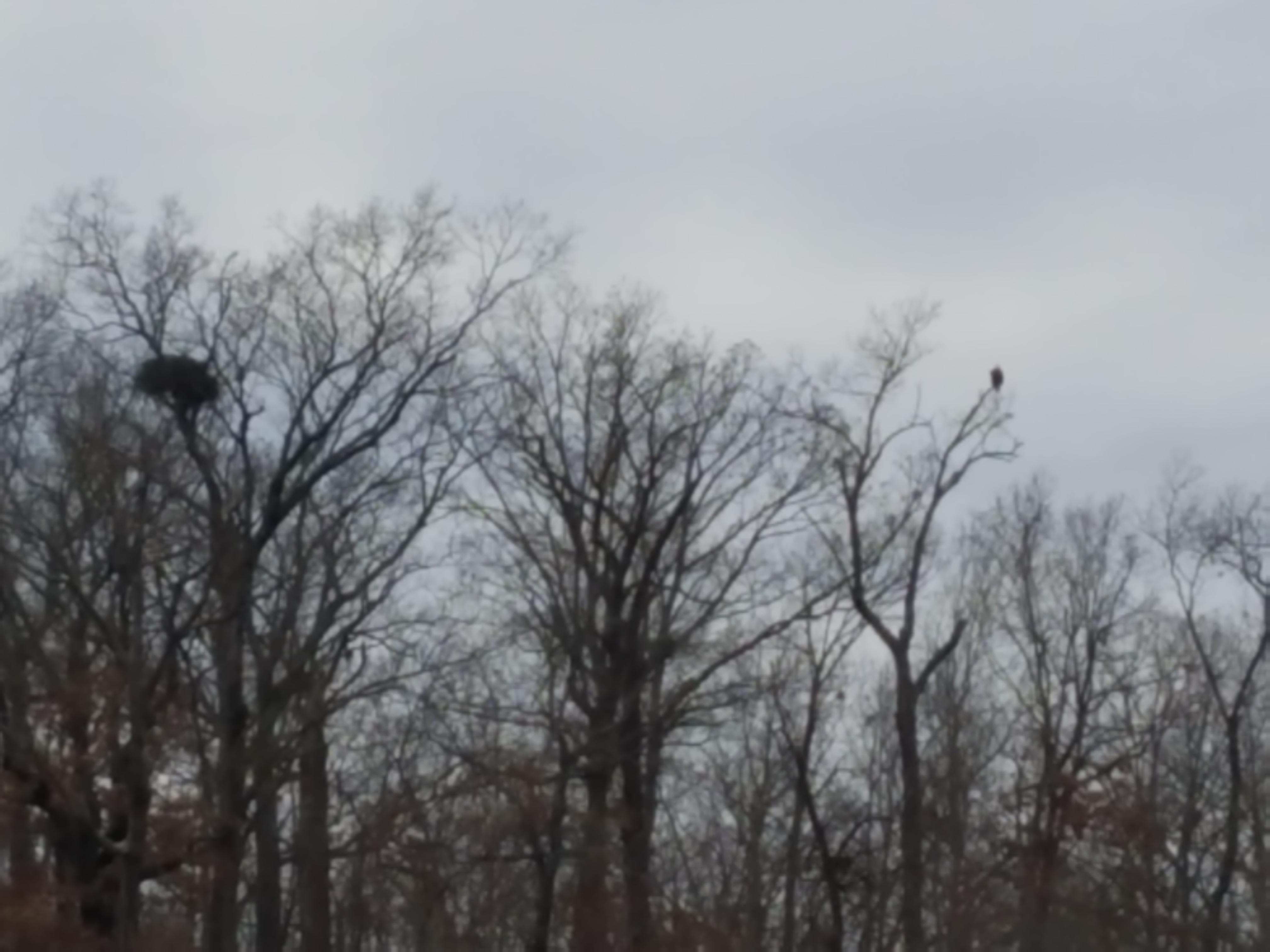 eagle days 12