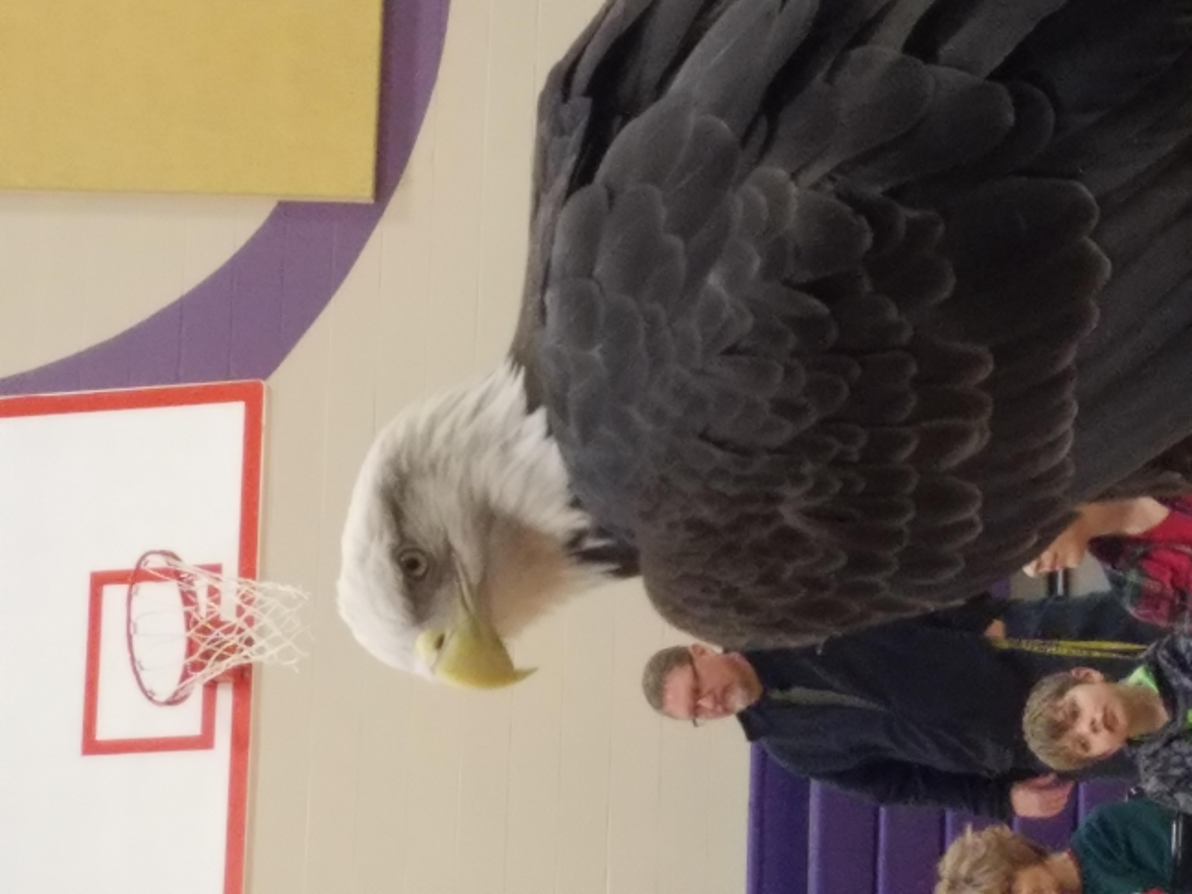 eagle days 24