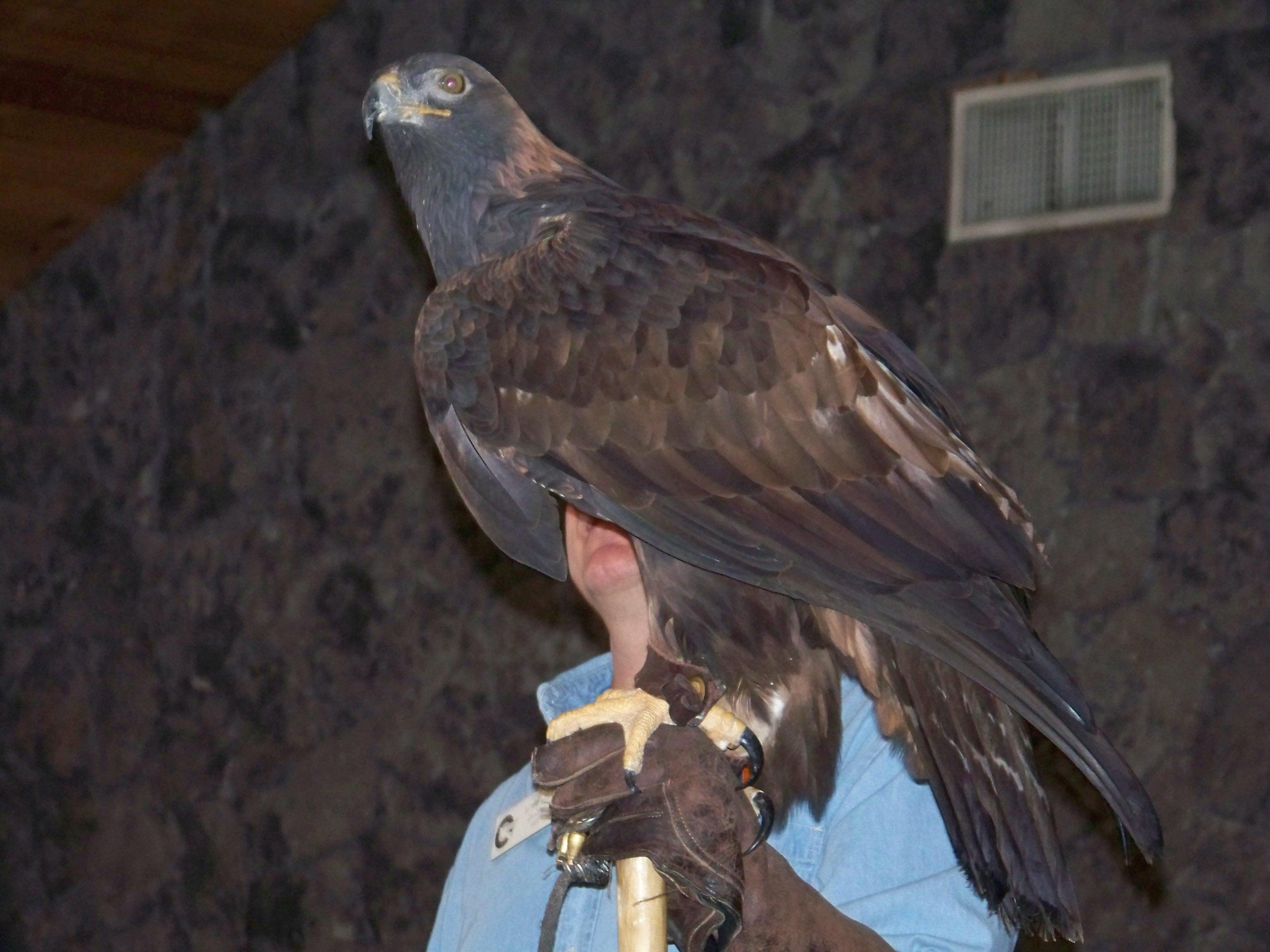 eagle days 5