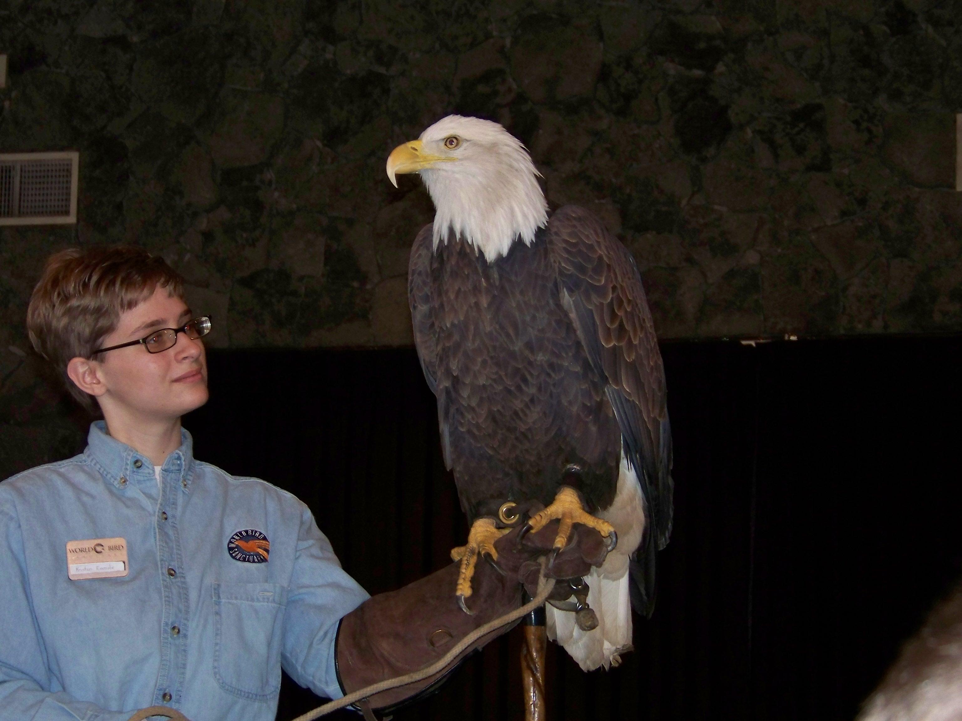 eagle days 4