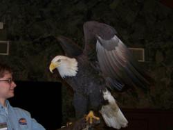 eagle days 1