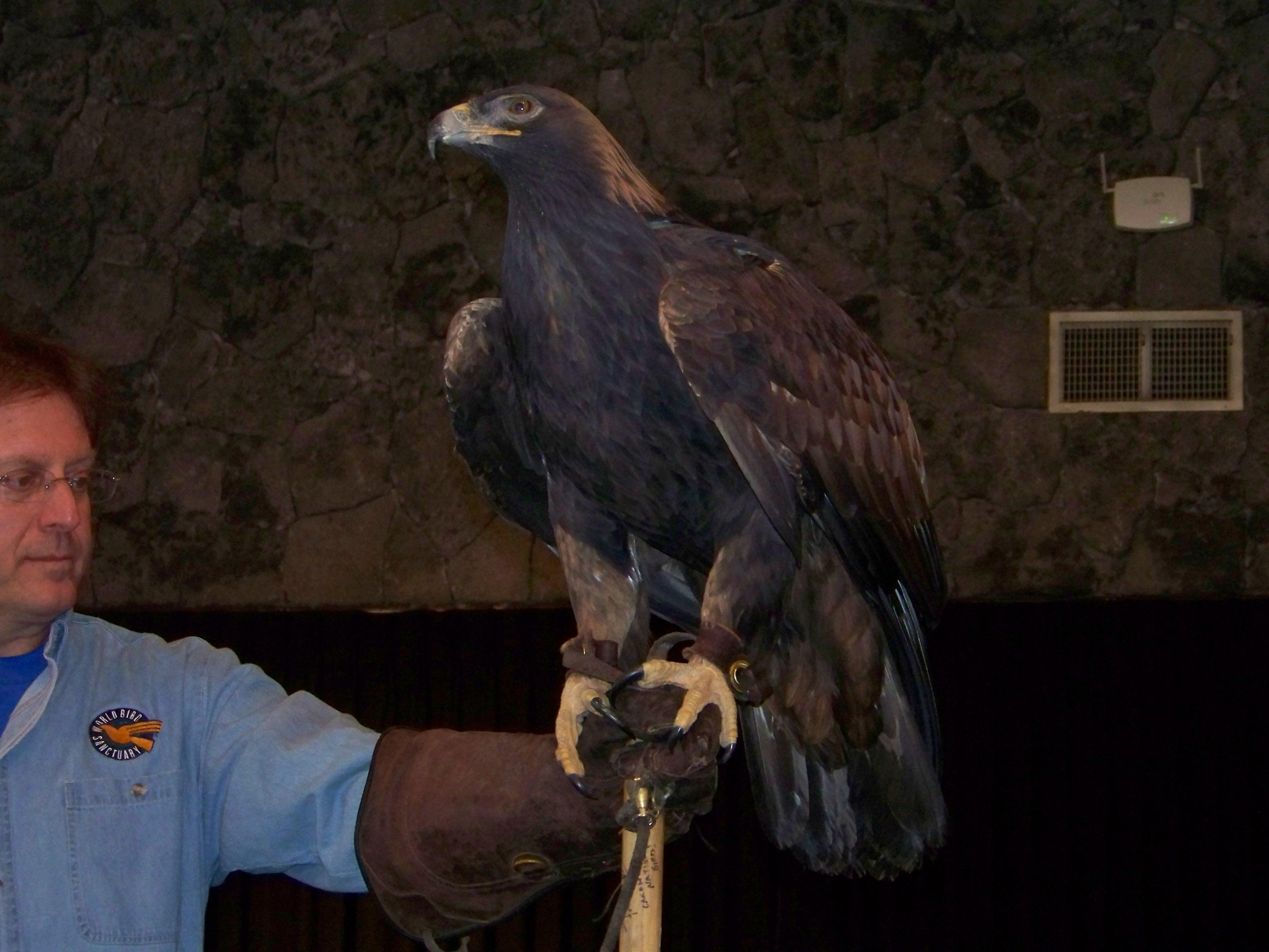 eagle days 2