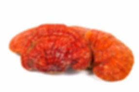 nấm linh chi đỏ nhật bản-2.jpg