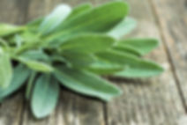 sage-leaves-close-up.jpg