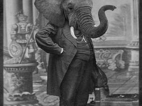 עור של פיל
