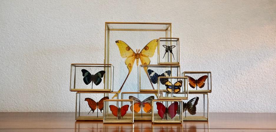 Vlinder Vitrines Messing