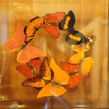 Vlinder krans in detail