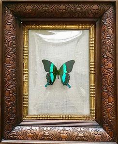 Antieke houten lijst met vlinder