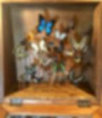 Antieke vlinder vitrine, vlinder atelier vlindersenco.com