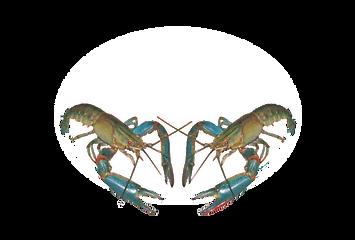 Cherax Park_logo白色.png