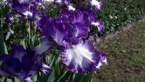 La Veggia da Iris