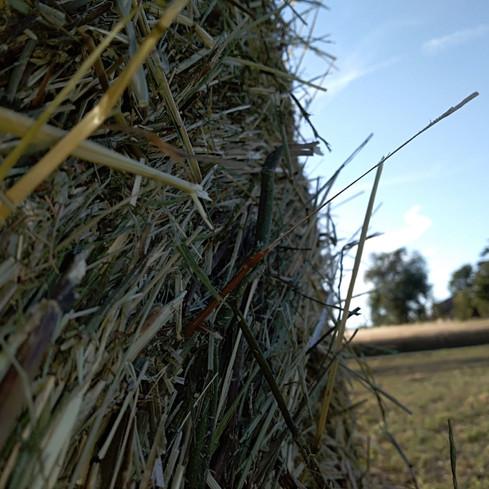 Storie, leggende e tradizioni che alcuni agricoltori e allevatori locali hanno voluto rinverdire dando vita ad un Consorzio orientato alla riscoperta ed alla conservazione delle biodiversità agricole e naturali che, nei secoli, hanno caratterizzato questo territorio