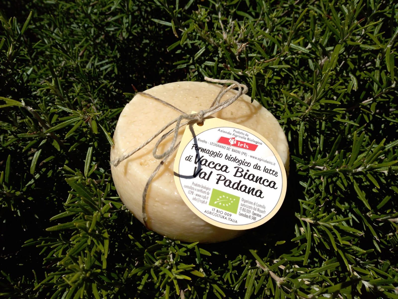Caciotta di Vacca Bianca Val Padana