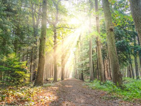 April 8, 2020     A Hike Through Hebrews 12:1-3