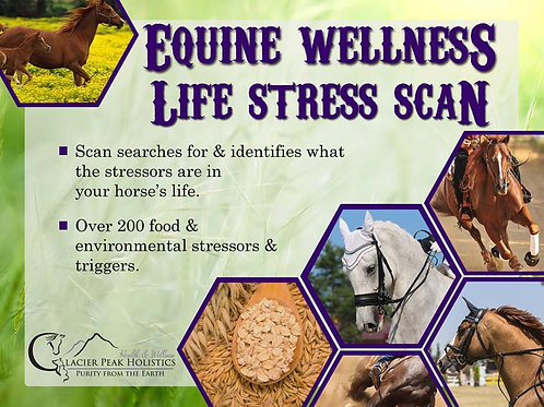 Glacier Peak Equine Wellness Life Scan 1 each