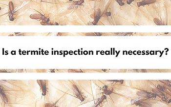 Is-a-Termite-InspectionNecessary_-1080x6