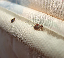 when-bedbugs-attack.jpg