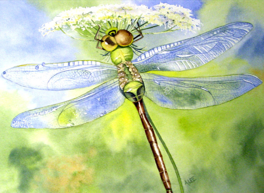 Dragonfly on White Lace