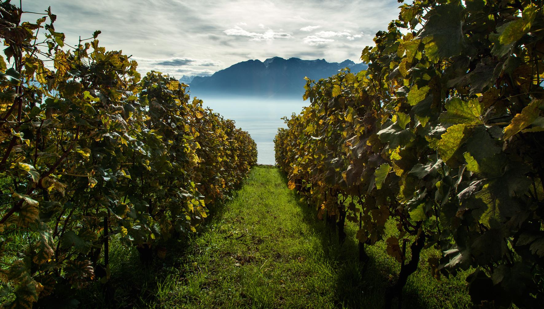 Viñas de Corseau