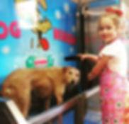 k9000 dog wash using Fidos dog washs