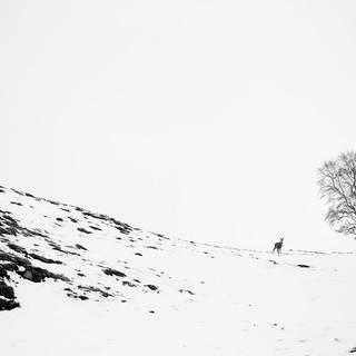 Lone tree deer snow_8455.jpg