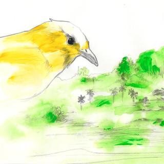 Versos sencillos, Canario amarillo.