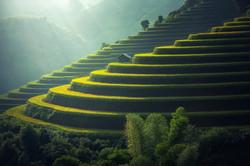 rice-plantation-1822444_1920.jpg