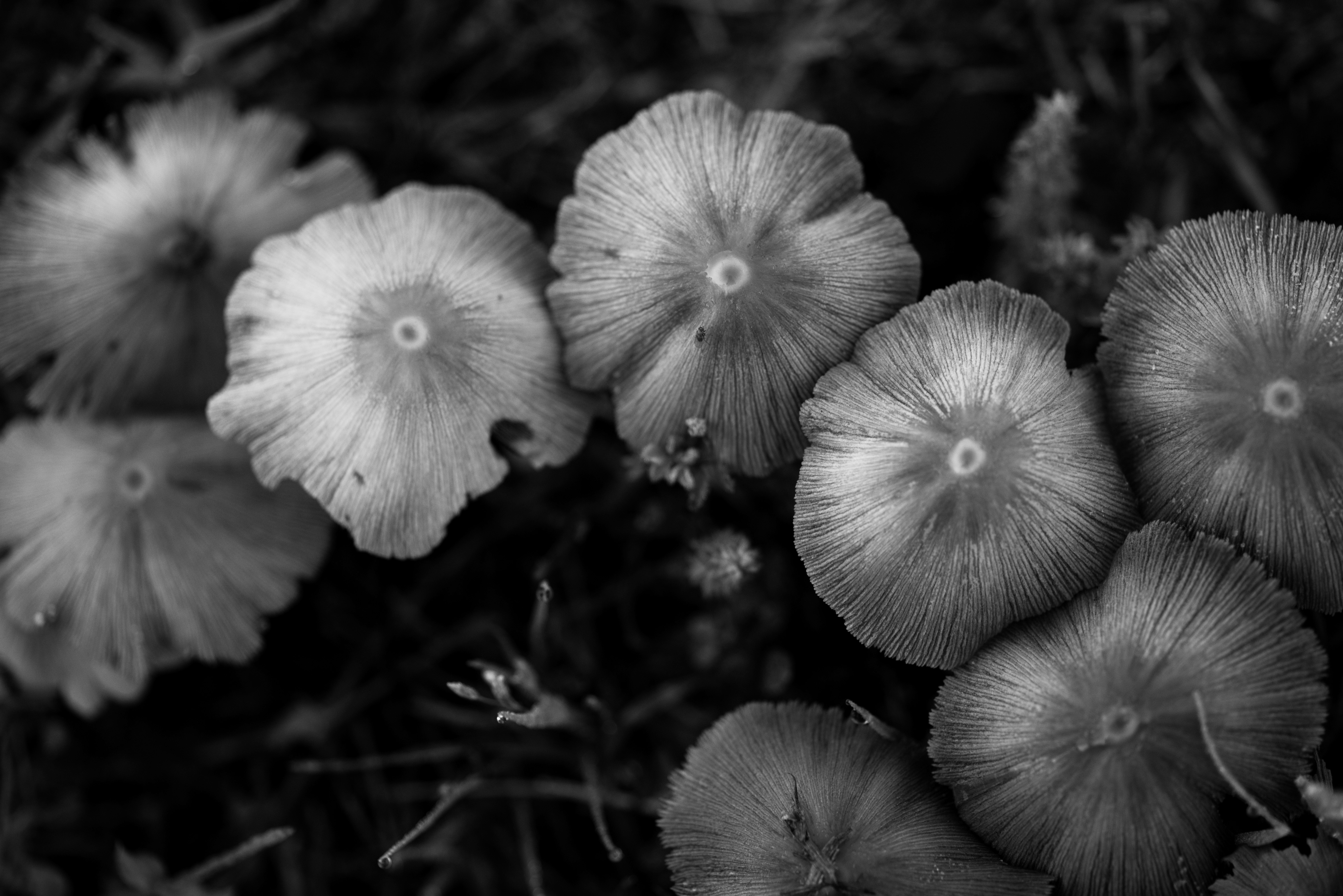 grayscale_photography_of_mushroom-scopio