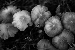 grayscale_photography_of_mushroom-scopio