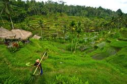 farmer_harvesting_at_the_farm-scopio-ddc