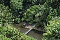 bridge_between_forest-scopio-ea6c619d-23