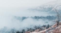 forest_covered_with_fogs-scopio-7e40265c