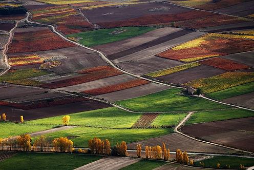 paisaje Rioja copia.jpg
