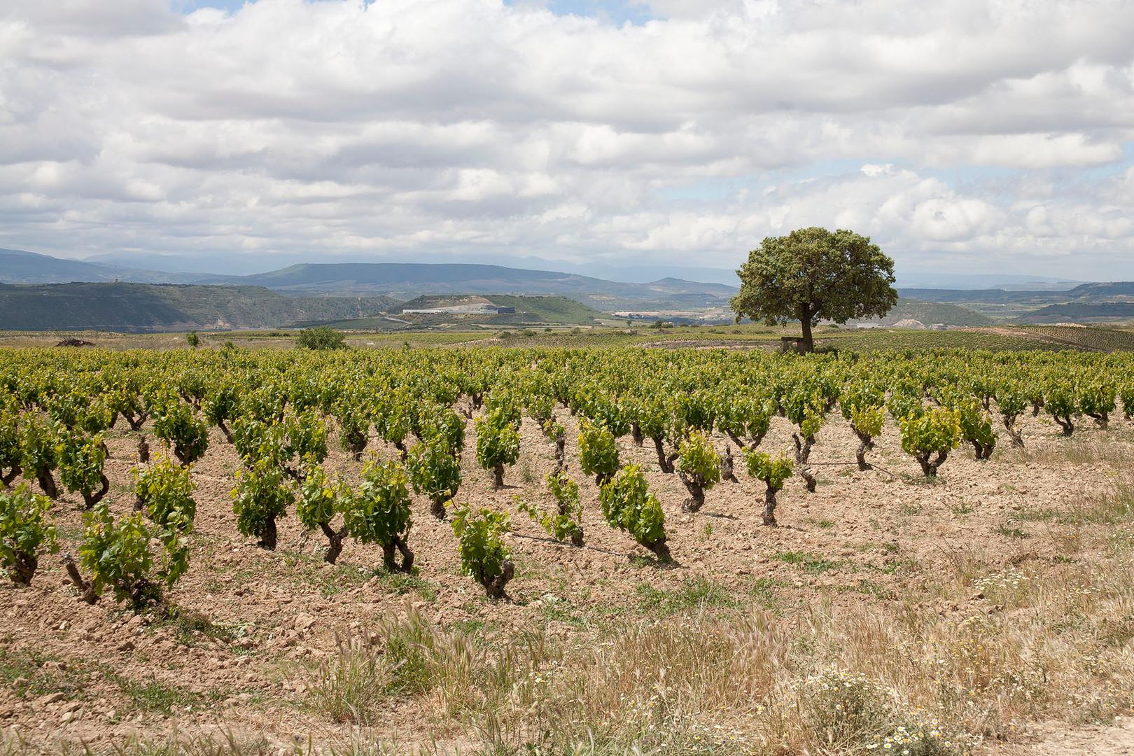Inteus Vieñdo Rioja ALvesa
