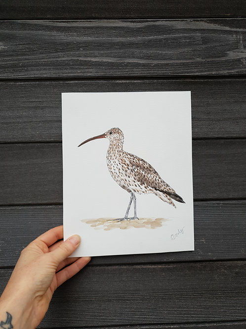 'Curlew' painting