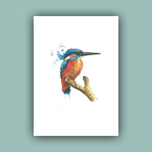 A4 Kingfisher print
