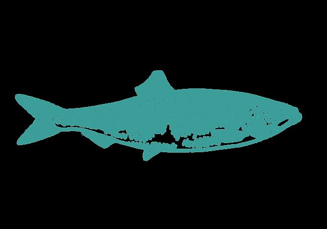 herring-digital-line-drawing-sarah-dowling-seafood-illustration_edited.png