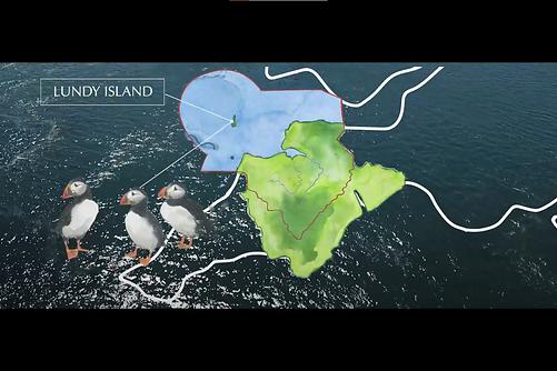 puffin-watercolour-map-illustration-sarah-dowling-bristol-wildlife-illustrator