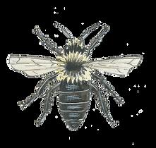 black-bee-watercolour-illustration-sarah-dowling-bristol-wildlife-illustrator.png