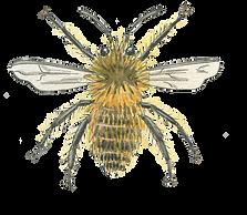 hairy-bee-watercolour-illustration-sarah-dowling-bristol-illustrator.png