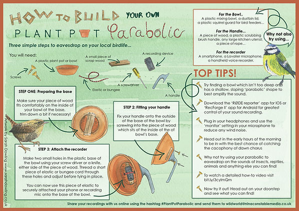 illustrated-how-to-guide-sarah-dowling-bristol-nature-illustrator