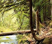 forest-3747489_640_edited.jpg